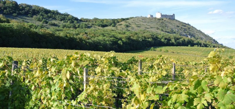 Чешское вино стало победителем Международного конкурса в Грузии