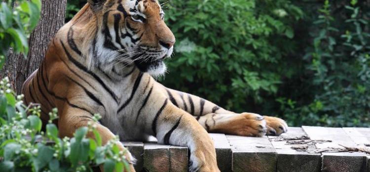 Зоопарк в Праге попал в ТОП10 лучших зоопарков мира