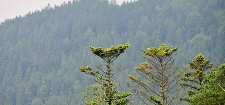 Прогулка среди верхушек ёлок по дорожке между кронами деревьев