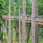 Дорожка между кронами деревьев