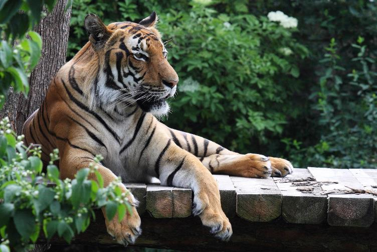 zoo-praha13