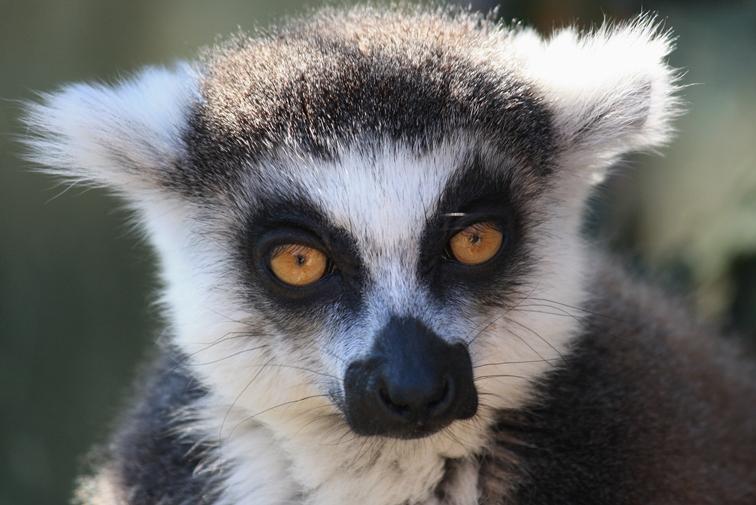zoo-praha16