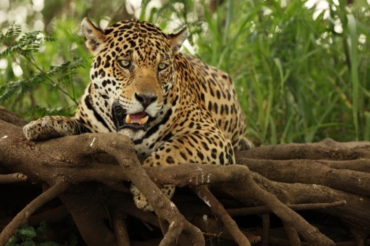 zoo-praha17