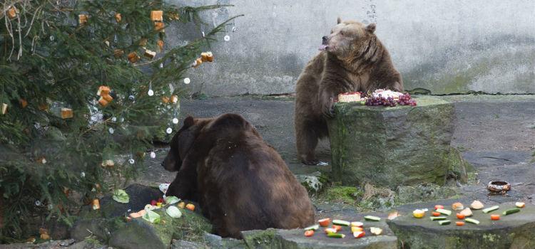 medvedi-vanoce