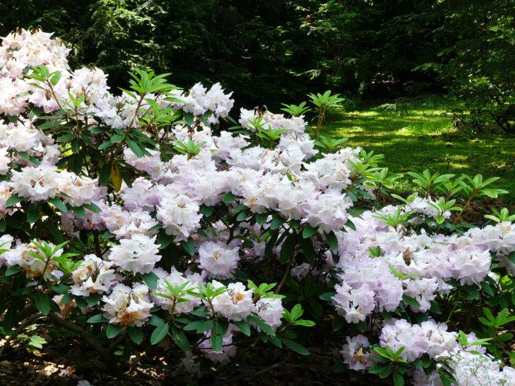 pruhonice-cveti-2