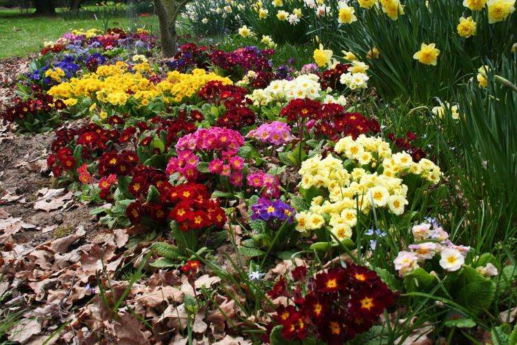 pruhonice-cveti